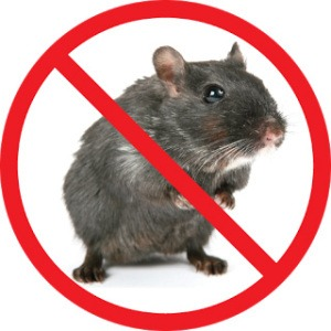 Stop Mice Infestations Pest Control Southside