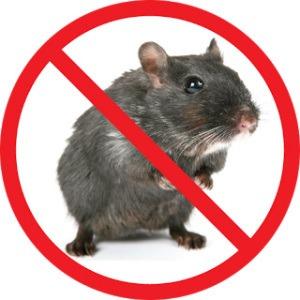 Stop Mice Infestations