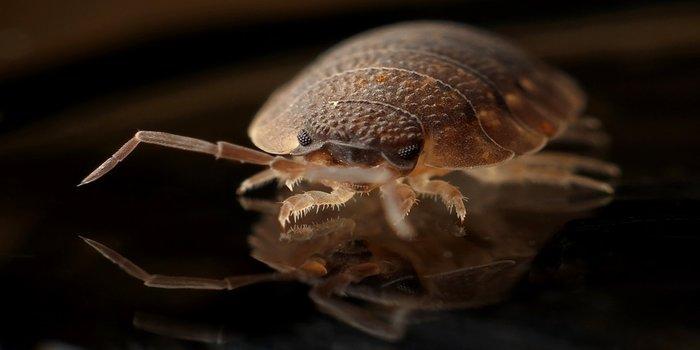 Bed Bug Prevention Brisbane - Pest Control Southside