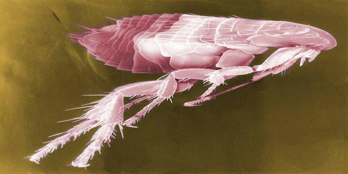 flea pest control Pest Control Southside