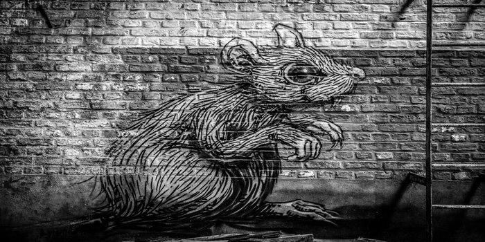 rodent pest control Pest Control Southside