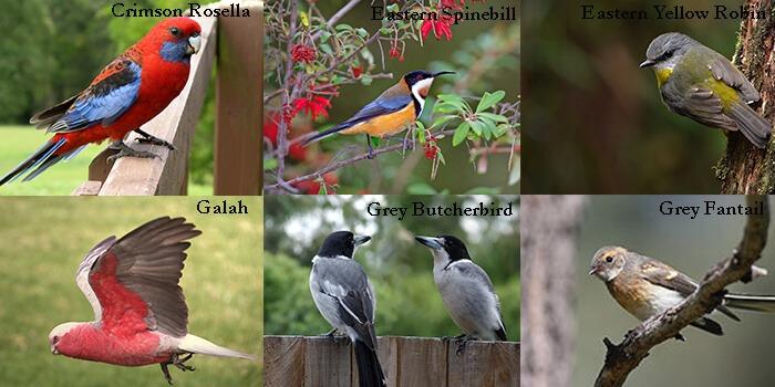 Common bird types Australia Pest Control Southside