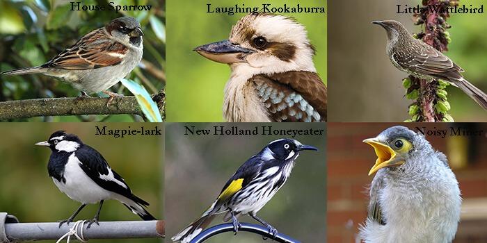 Australian Birds Pest Control Southside