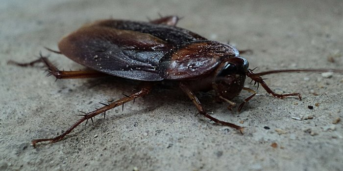 home remedies cockroach Pest Control Southside