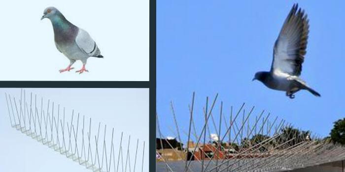 bird spikes as deterrent