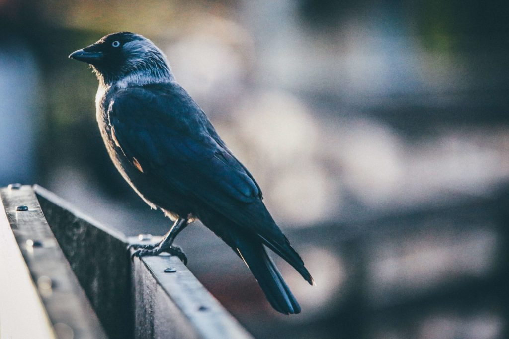 Bird removal Pest Control Southside