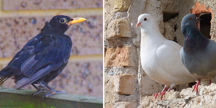 how to scare birds away Pest Control Southside