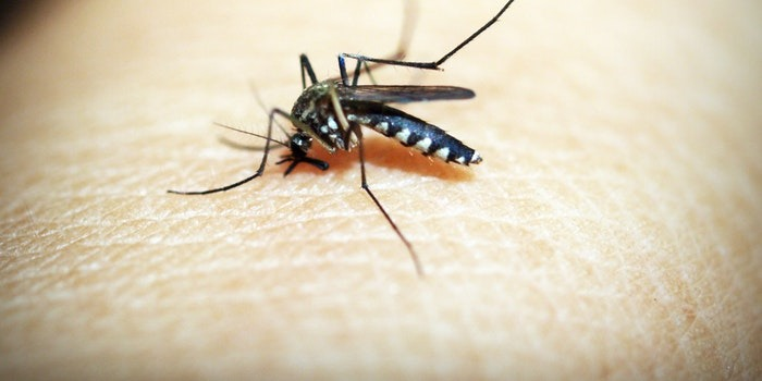Mosquito control brisbane Pest Control Southside