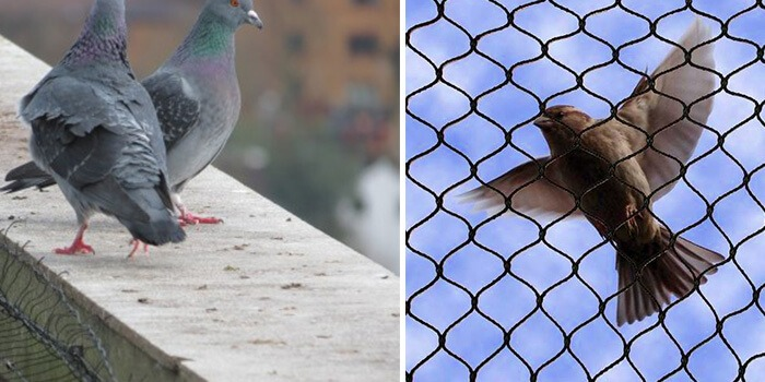 getting rid of pigeons pests Pest Control Southside