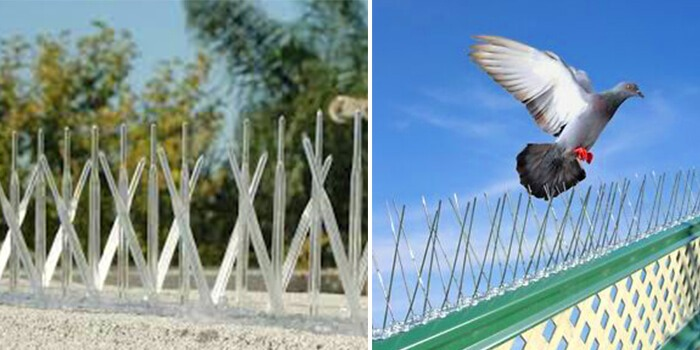 plastic and stainless bird spikes
