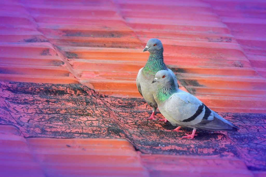 Bird proofing guide Pest Control Southside