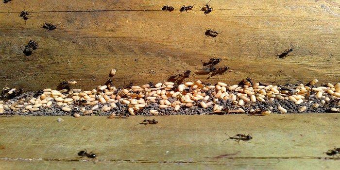 Ant Removal Brisbane Southside - Pest Control Southside