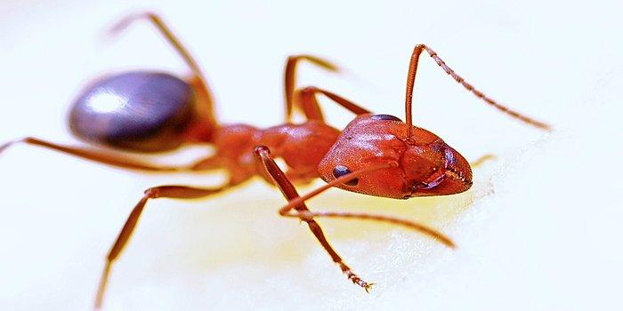 ant pest control brisbane - Pest Control Southside