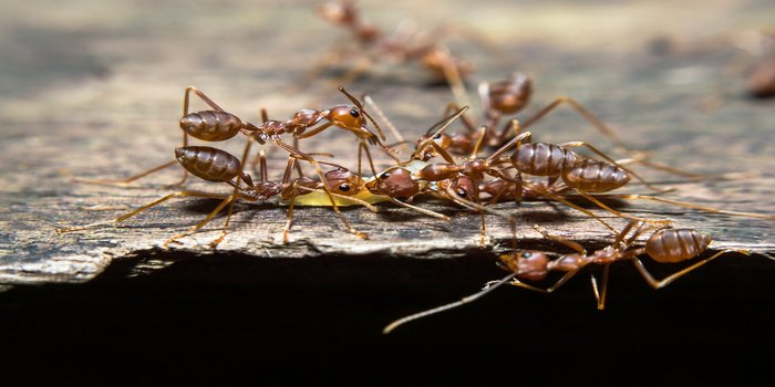 Ant Exterminator Brisbane - Pest Control Southside