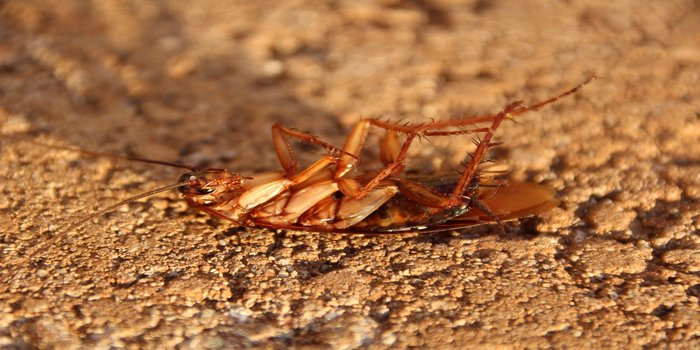 cockroach pest control Pest Control Southside
