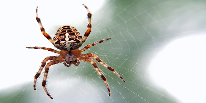 spider control Pest Control Southside