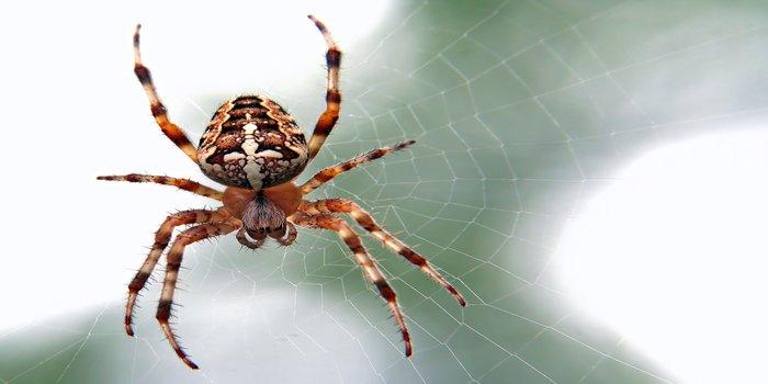 spider control Pest Control Southside