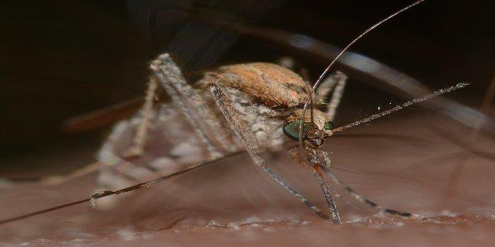 Pest Control Southside - get rid of mosquitos