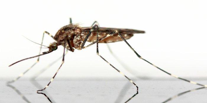mosquito pest control near me