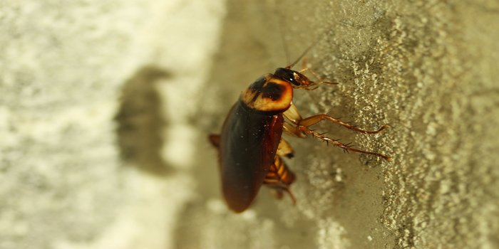 cockroach infestation Pest Control Southside