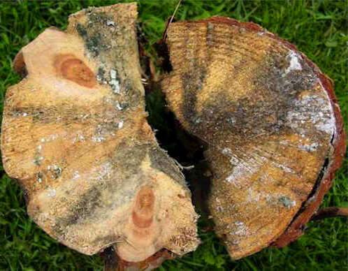 fungal damage Pest Control Southside
