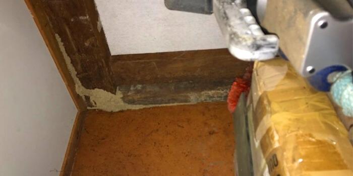 termites invading room corner