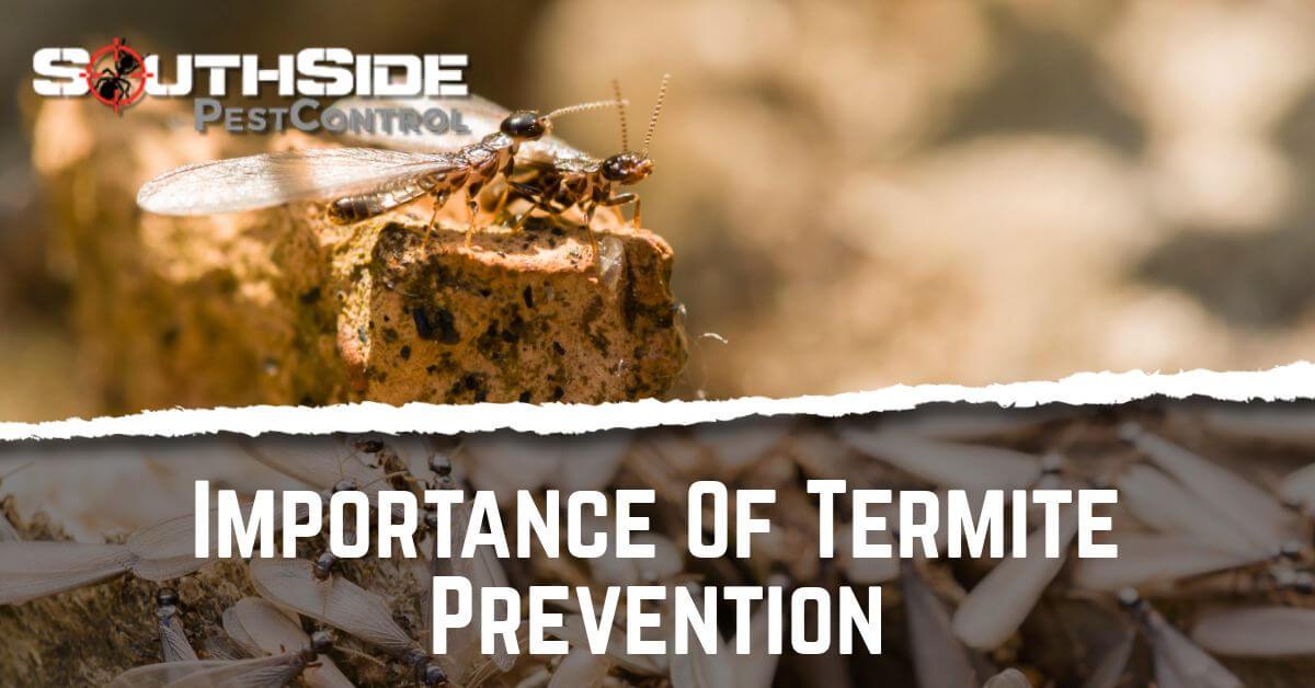 Importance Of Termite Prevention