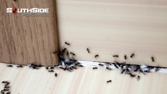 Common Pest Mistakes