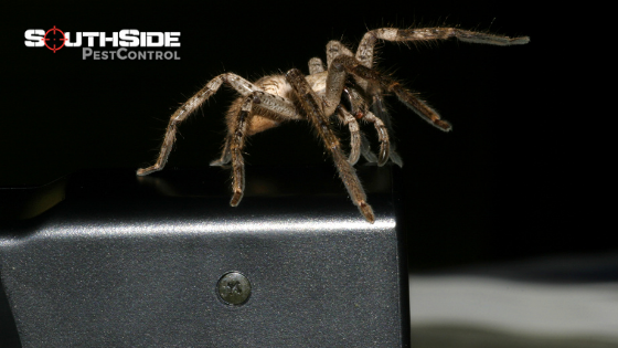 Are Spiders Pests?