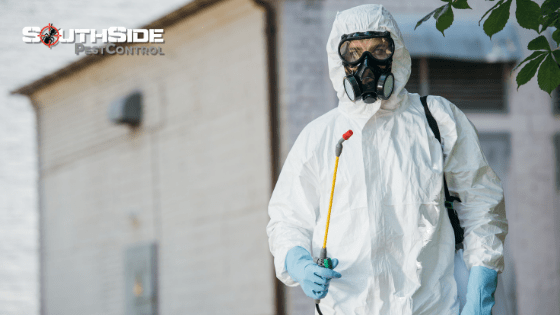 How Pest Control Southside Can Help You!