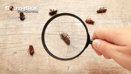 Why We Are South Brisbane's Most Reliable, Experienced and Professional Pest Experts