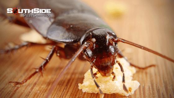 Humane Pest Control Services
