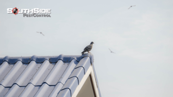 Expert Bird Removal