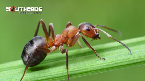 How You Can Get Rid of Ants